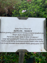 Azalea Nancy of Robin Hill 3-gal