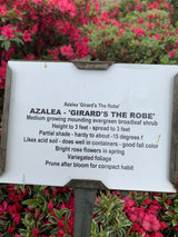 Azalea Girards The Robe 3-gal