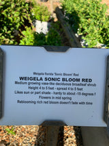 Weigela Sonic Bloom Red 3-gal (Out of stock)