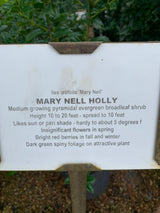 Holly Mary Nell Ilex 3-gal