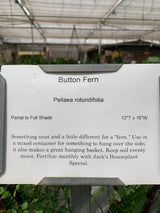 Button Fern 4""