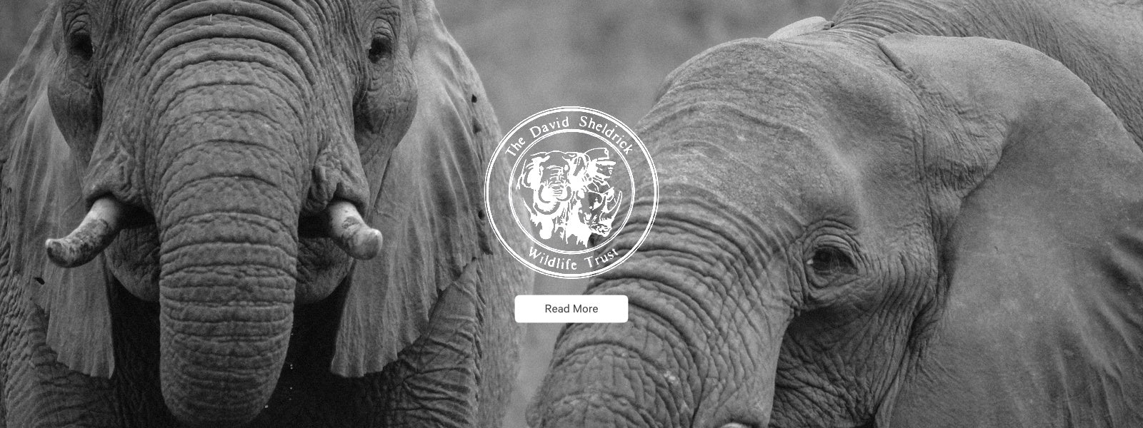 The Give Infinity ∞ Charity Program: Your Impact - The David Sheldrick Wildlife Trust