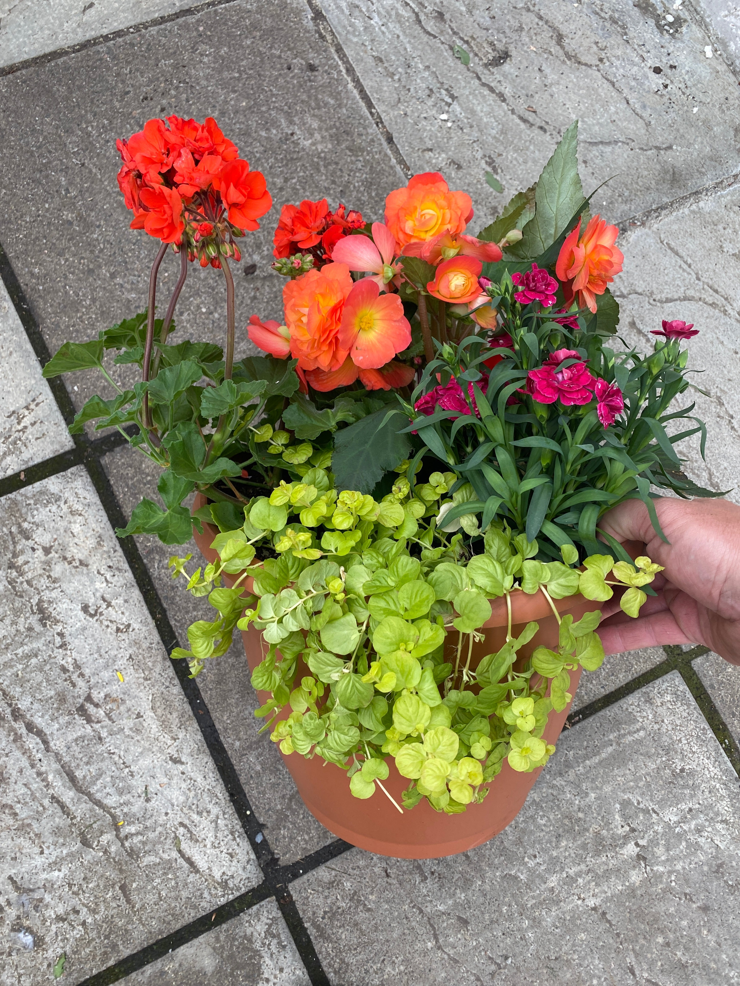 Bell Planter - Annual Planter
