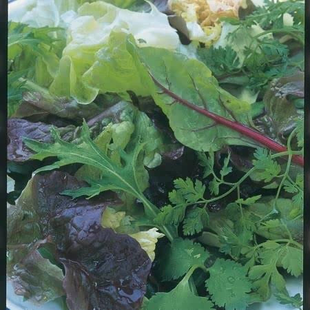 Salad Leaf Herb Mix