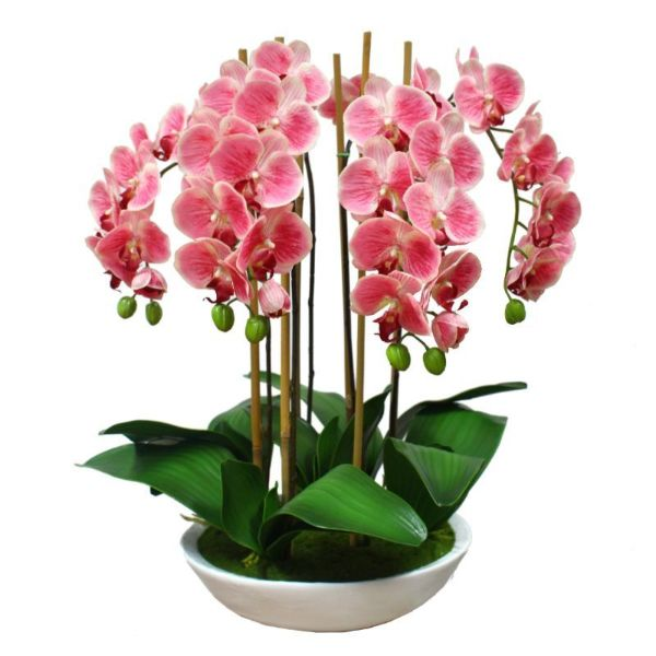 Hamptons Home Real Touch Pink Phalaenopsis Orchids in Bowl 65 cm