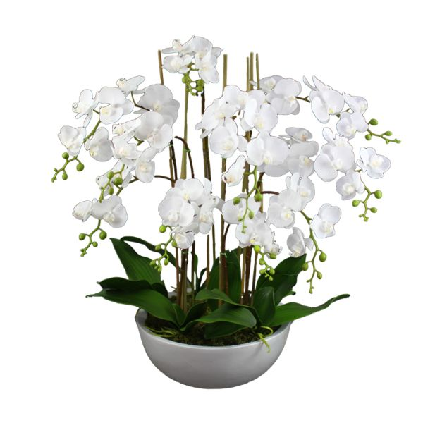 Hamptons Home Real Touch Phalaenopsis Orchids in Pot 75 cm
