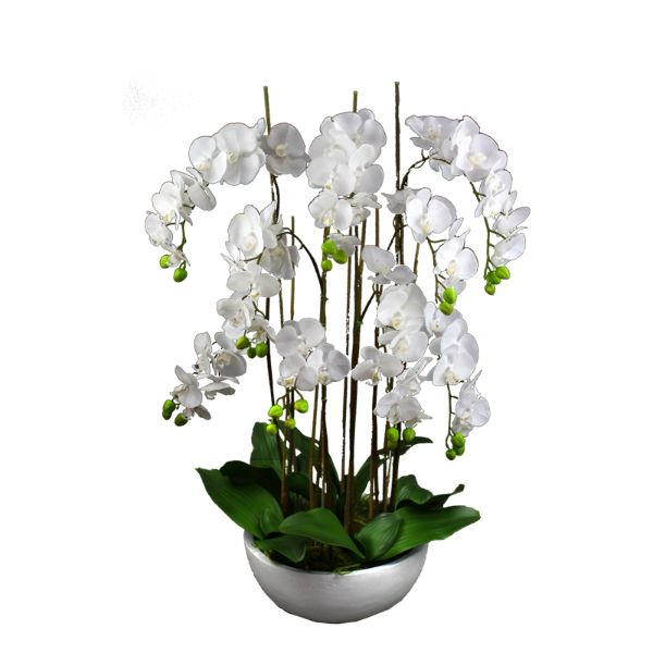 Hamptons Home Real Touch Phalaenopsis Orchids in Pot 95 cm