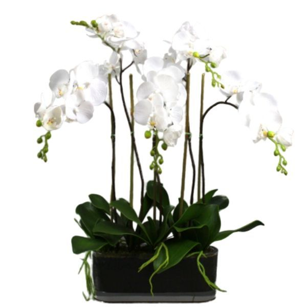 Hamptons Home Real Touch Phalaenopsis Orchids in Glass Pot 60 cm