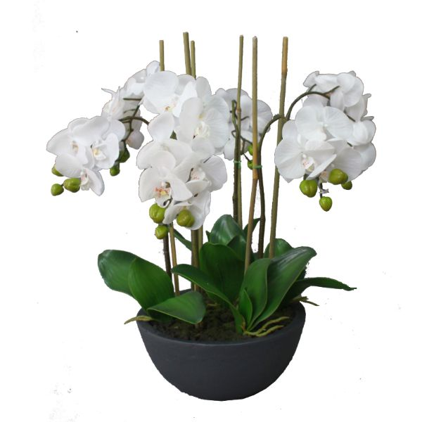Hamtons Home Real Touch Phalaenopsis Orchids in Black Pot 55 cm