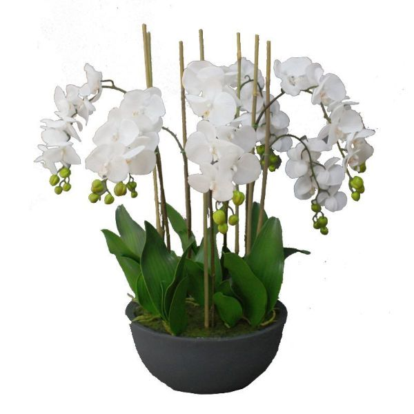 Hamptons Home Real Touch Phalaenopsis Orchids in Black Pot 75 cm