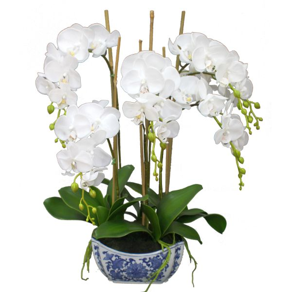 Hamptons Home Real Touch Phalaenopsis Orchids in Dynasty Pot 66 cm