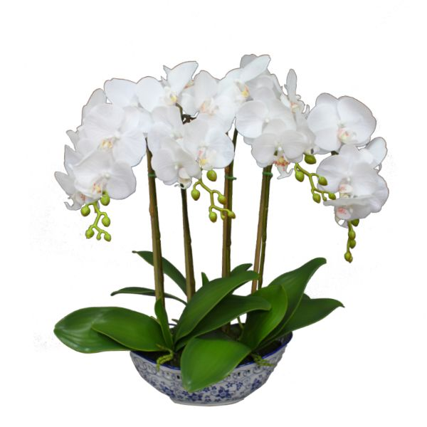 Hamptons Home Real Touch Phalaenopsis Orchids in Dynasty Pot 52 cm H