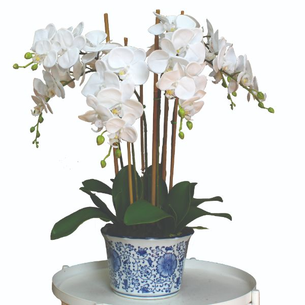 Hamptons Home Real Touch Phalaenopsis Orchids in Dynasty Pot 60 cm