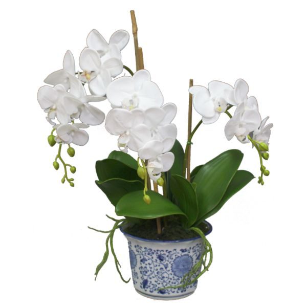 Hamptons Home Real Touch Phalaenopsis Orchids in Dynasty Vase 63.5 cm