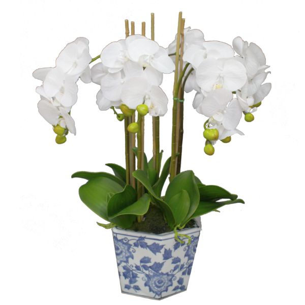 Hamptons Home Real Touch Phalaenopsis Orchids in Dynasty Pot 58 cm