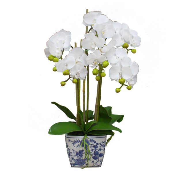 Hamptons Home Real Touch Phalaenopsis Orchids in Dynasty Pot 70 cm