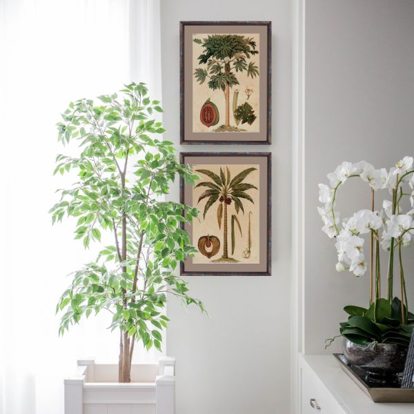 Hamptons Home Pawpaw Palm Small Framed Artwork (Design 1) 53 cm x 43.5cm