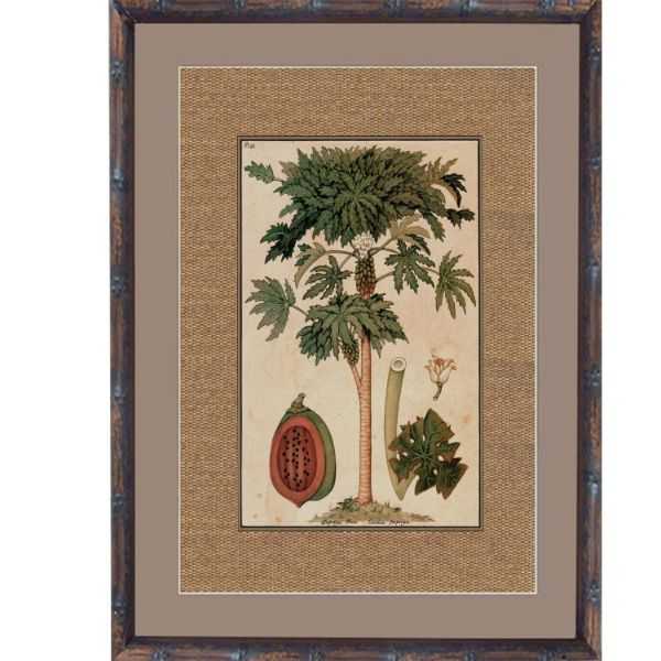 Dark Rattan Paw Paw (Design 1) Framed Artwork 93 cm x 74 cm