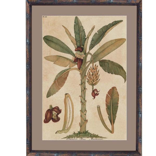 Banana Palm Small Framed Artwork  (Design 2) 53 cm x 43.5cm