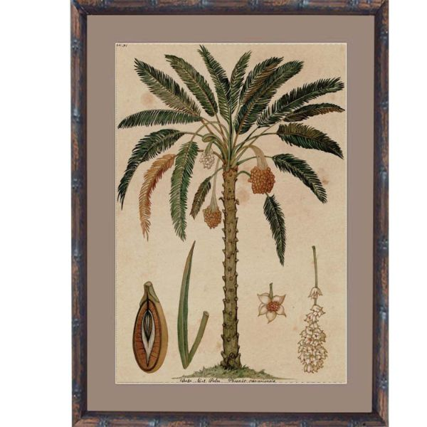 Hamptons Home Date Palm Small Framed Artwork