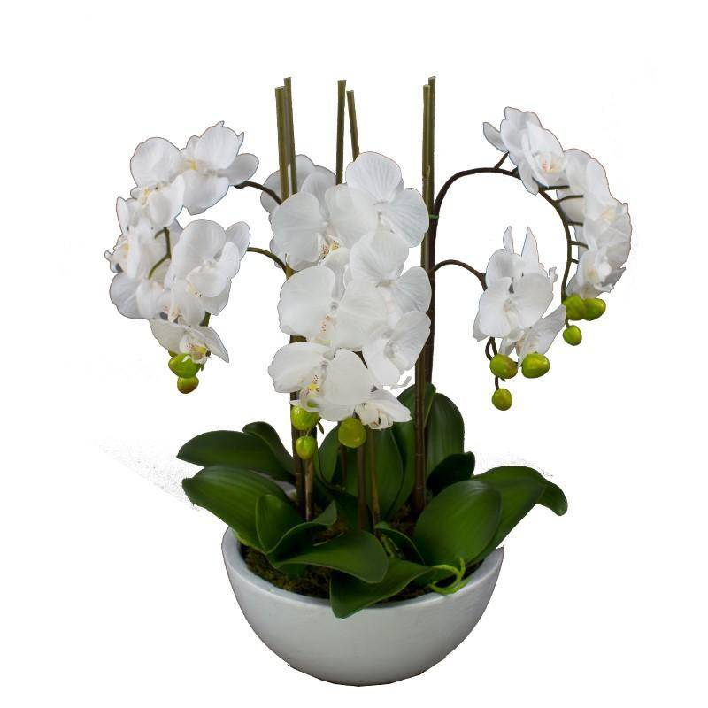 Real Touch Giant Faux Phalaenopsis Orchids in White Bowl 55 cm - Hamptons Home {product_type] Hamptons style Furniture