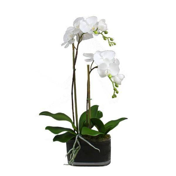 Real Touch Phalaenopsis Orchids in Glass Pot 50 cm H - Hamptons Home {product_type] Hamptons style Furniture