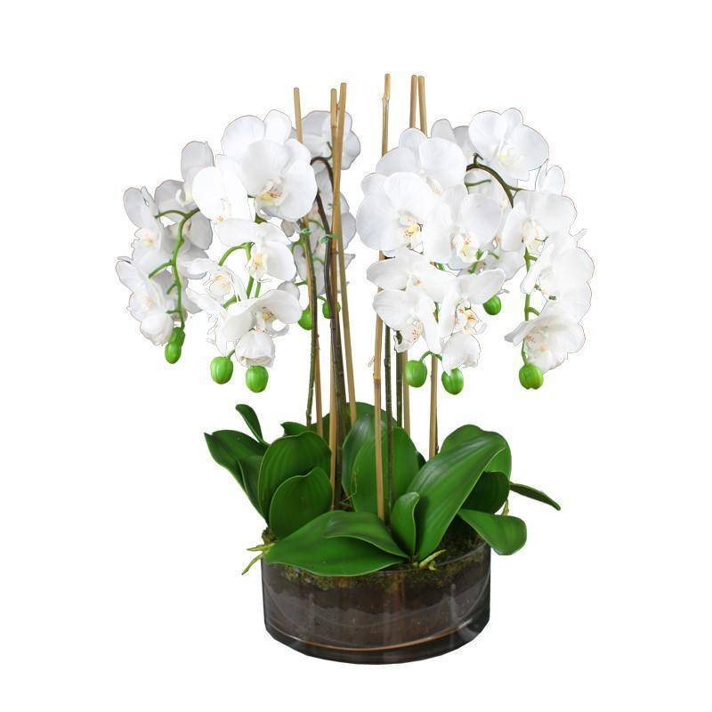 Real Touch Phalaenopsis Orchids in Glass Vase 54 cm H - Hamptons Home