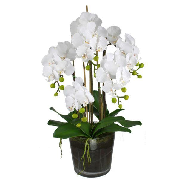Flowers - Real Touch White Phalaenopsis Orchids In Glass Pot 68 Cm