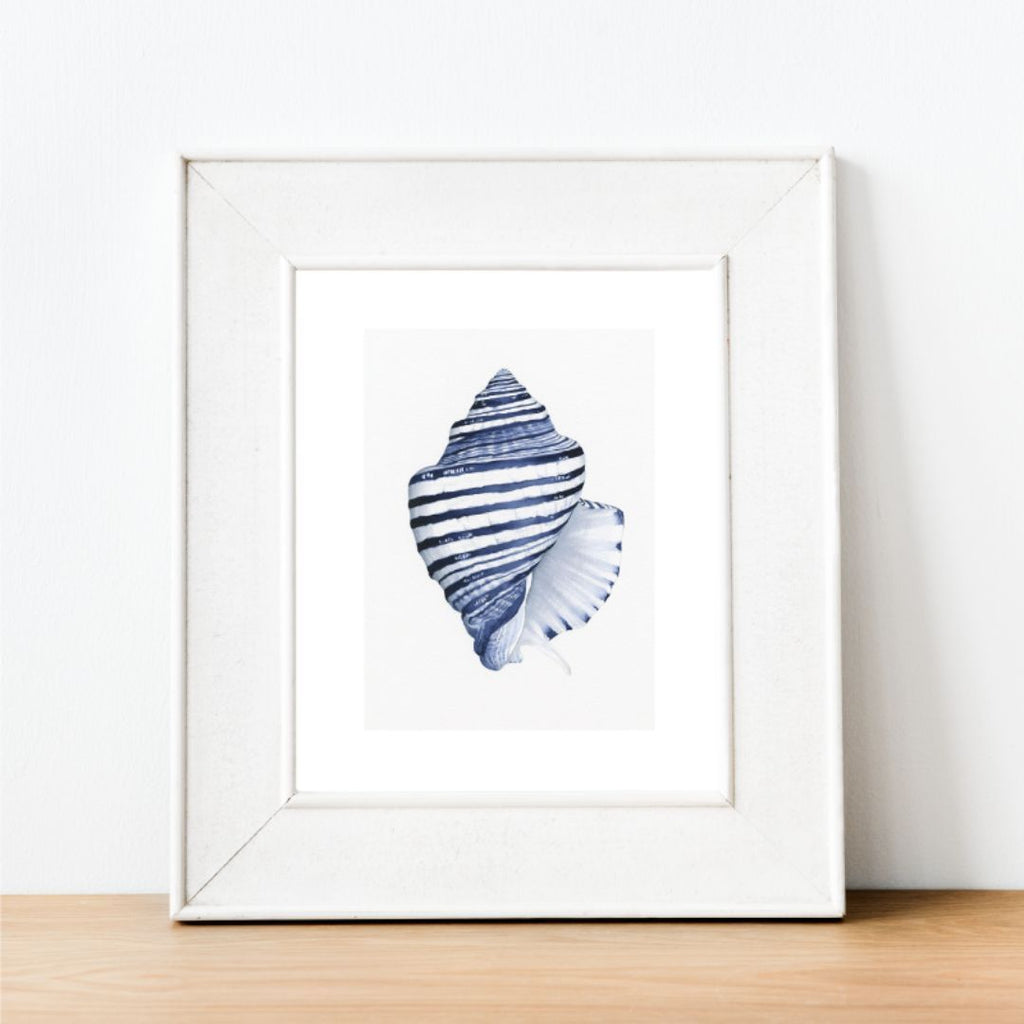 Wall Art - Conch Shell Blue And White Art Print | Hamptons Home