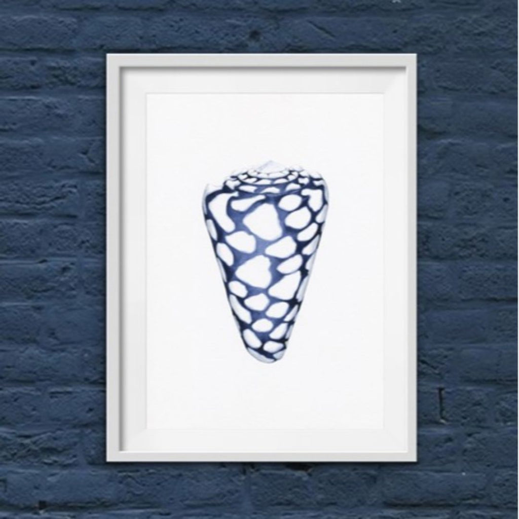 Wall Art - Conus Shell Blue And White Art Print | Hamptons Home
