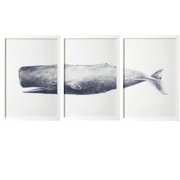 Wall Art - Grey And White Whale Print White Framed Artwork Set Of 3 | Hamptons Home