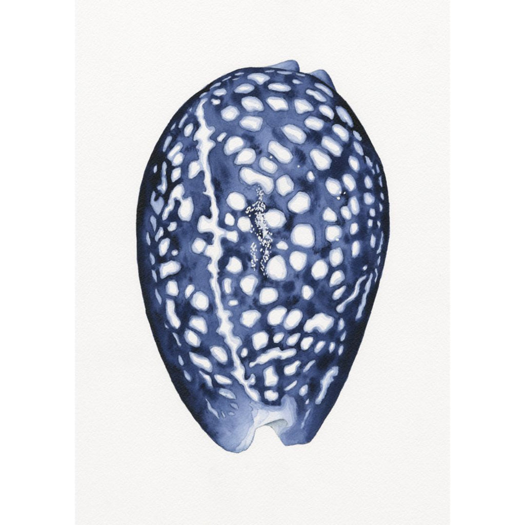 Wall Art - Paua Shell Blue And White Art Print | Hamptons Home