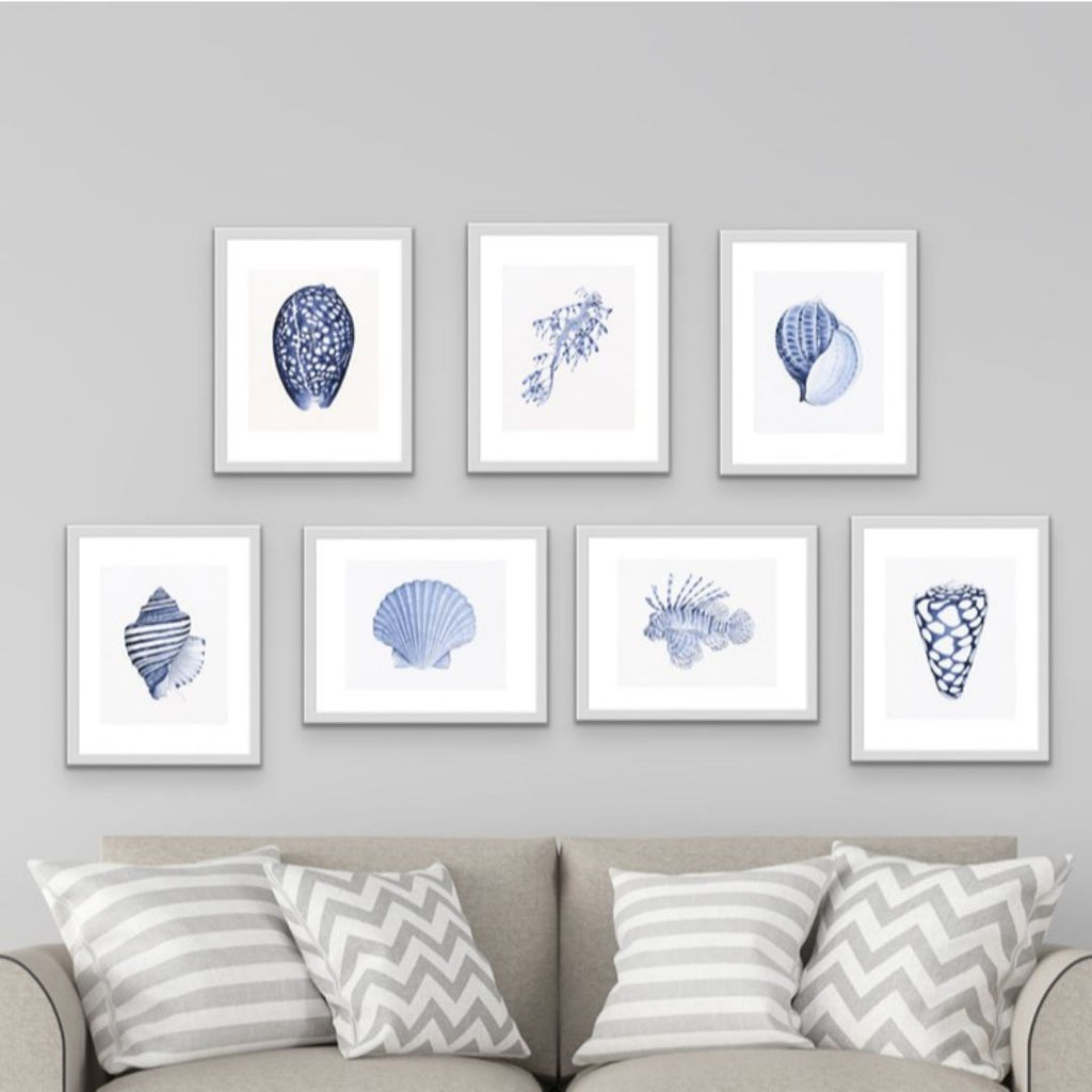 Wall Art - Scallop Shell Blue And White Art Print | Hamptons Home