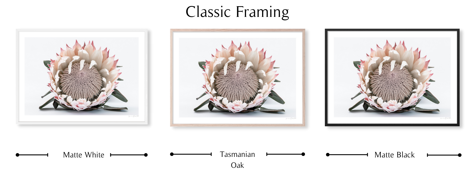 Protea #1 By Lauren Daly | Classic Framing Style | LD Art House