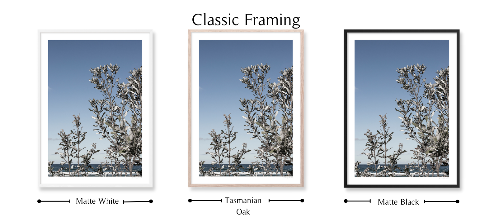 Silver Banksia by Lauren Daly |Classic Framing Style | LD Art House