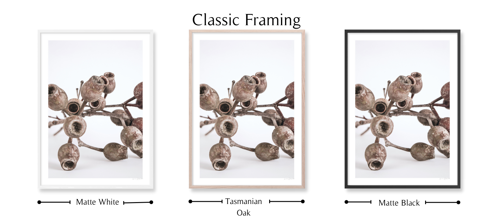 Gumnuts by Lauren Daly | Classic Framing Style | LD Art House