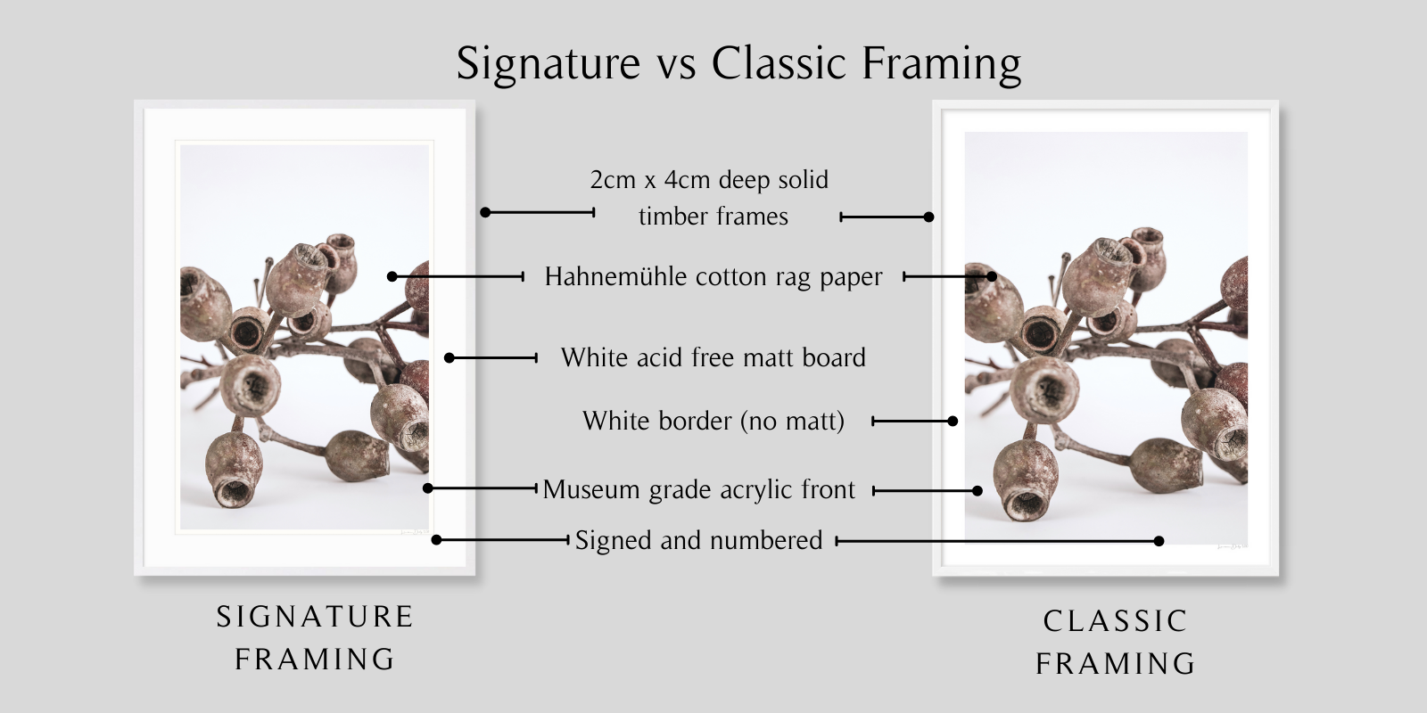 Gumnuts by Lauren Daly | Classic vs Signature Framing Styles | LD Art House