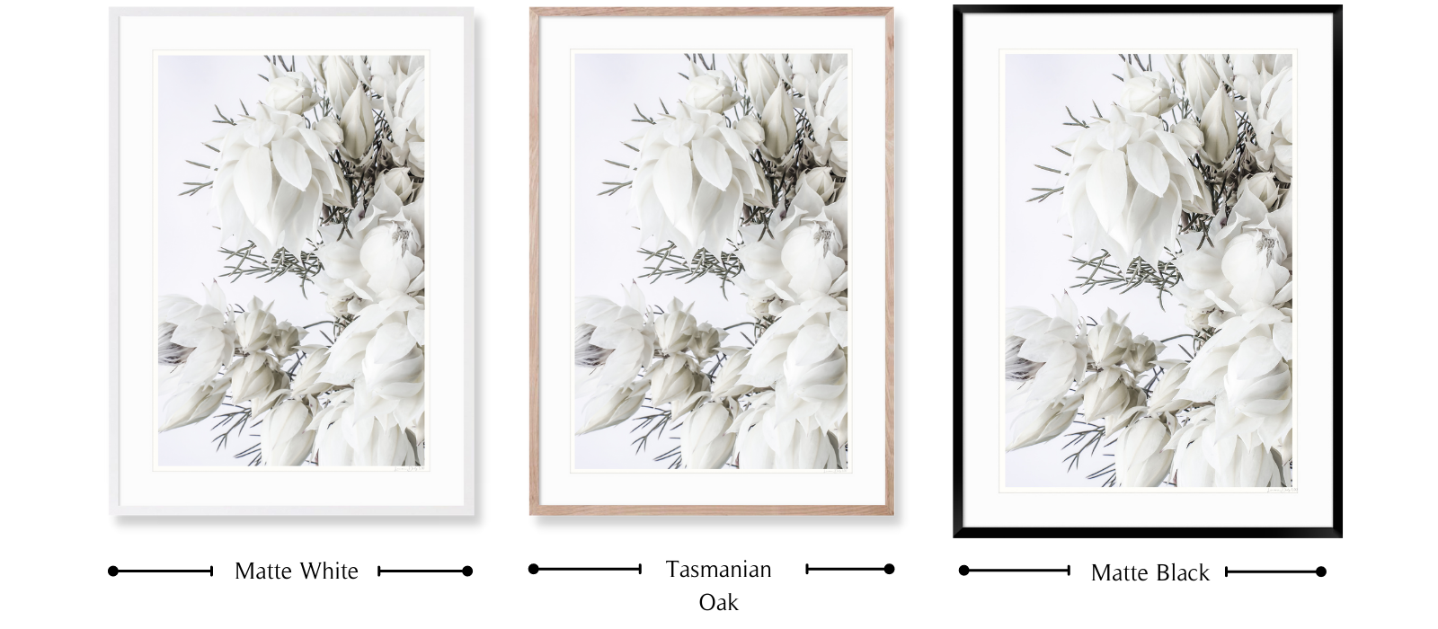 Blushing by Lauren Daly | Signature Framing Colours | LD Art House