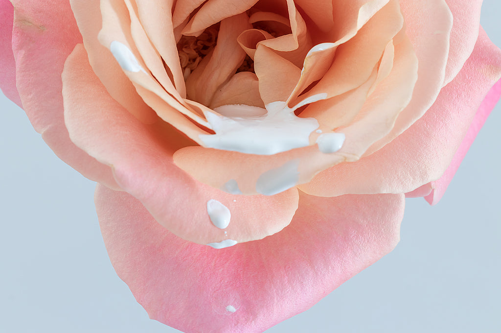 Rose Drops* Photographic interior wall art print by Lauren Daly