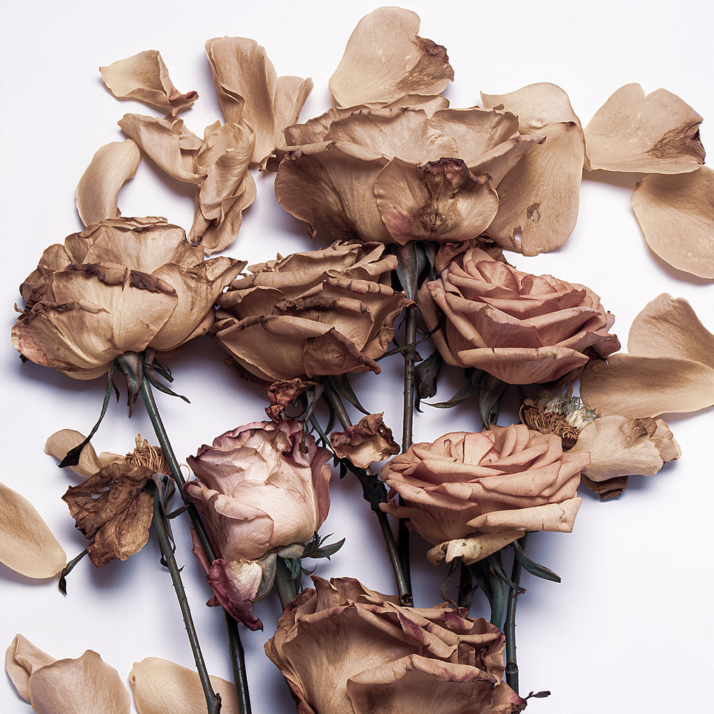 By Any Other Name | Original photographic floral artwork of roses by Lauren Daly | LD Art House