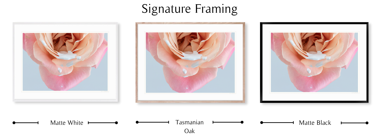 Rose Drops by Lauren Daly | Signature Framing Style | LD Art House