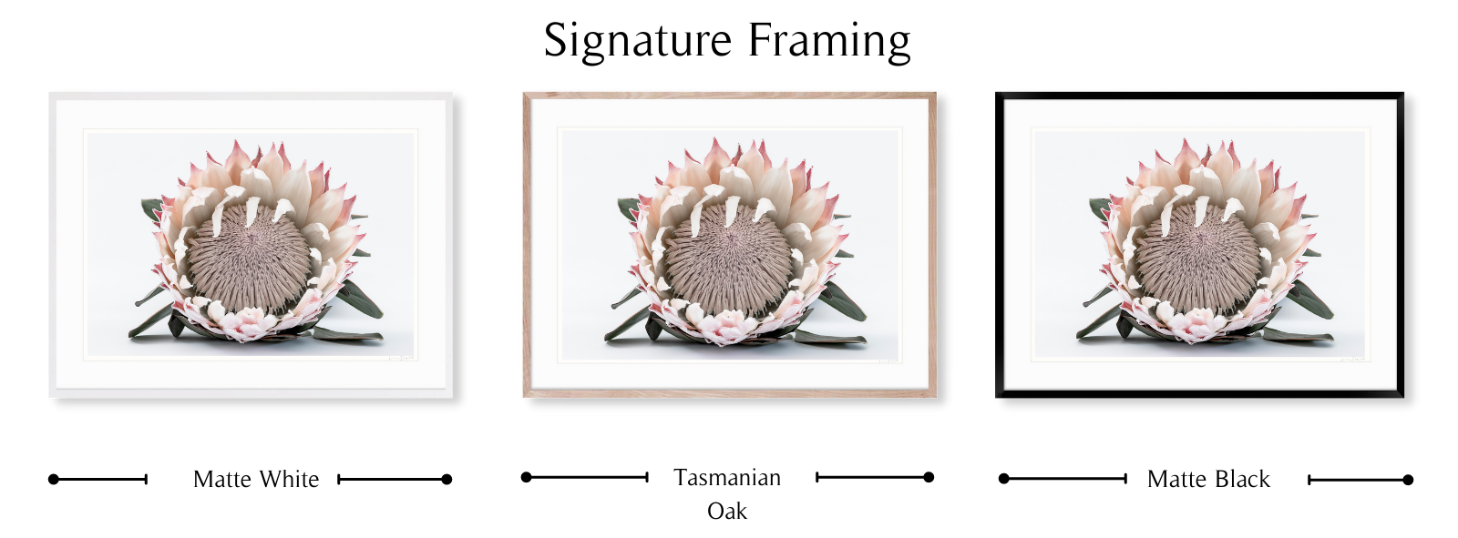 Protea #1 By Lauren Daly | Signature Framing Style | LD Art House