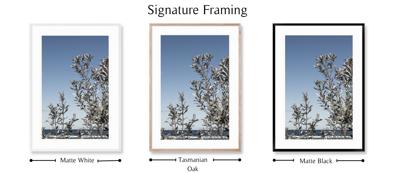Silver Banksia by Lauren Daly | Signature Framing Style | LD Art House