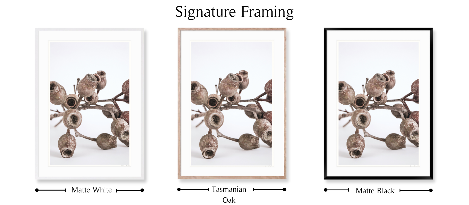 Gumnuts by Lauren Daly | Signature Framing Style | LD Art House