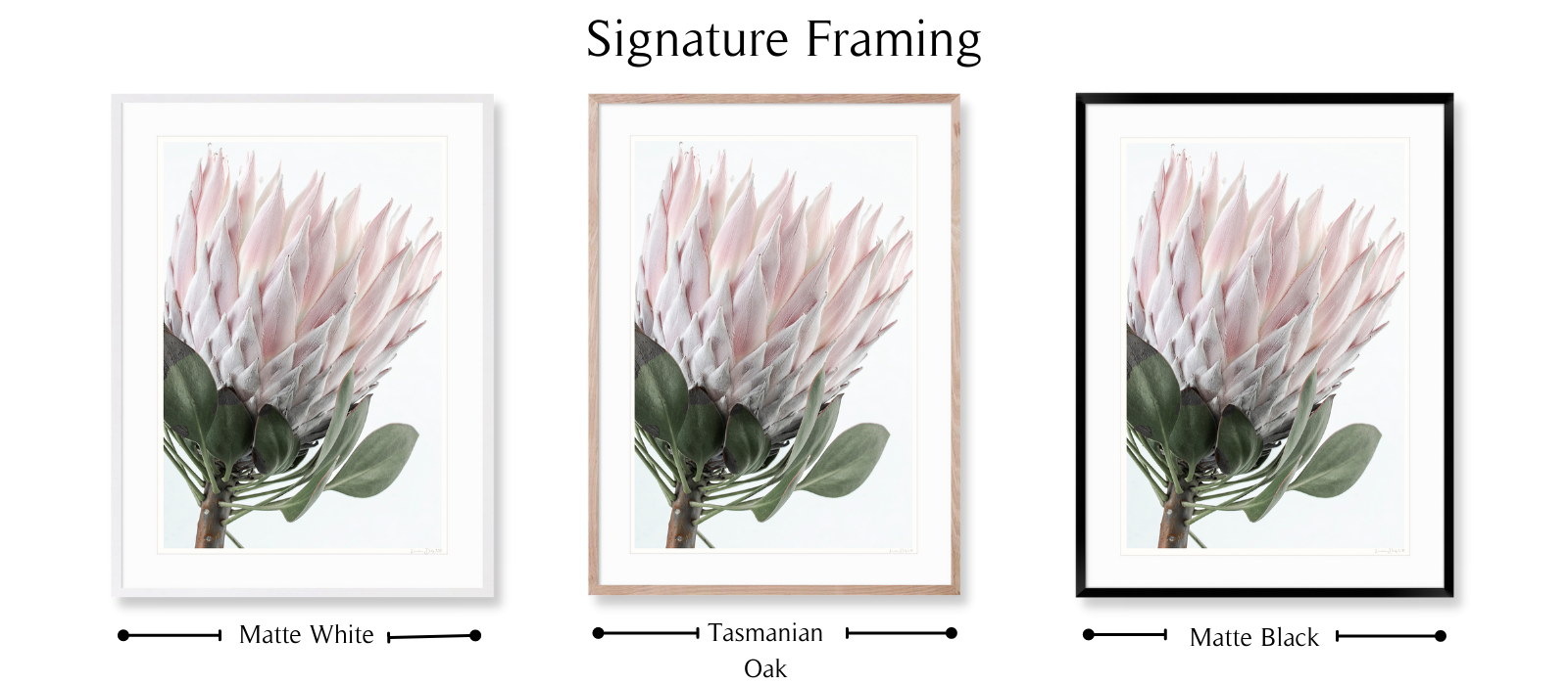 Protea #3   SIGNATURE Framing Style   Limited edition photographic, floral fine art print by Lauren Daly