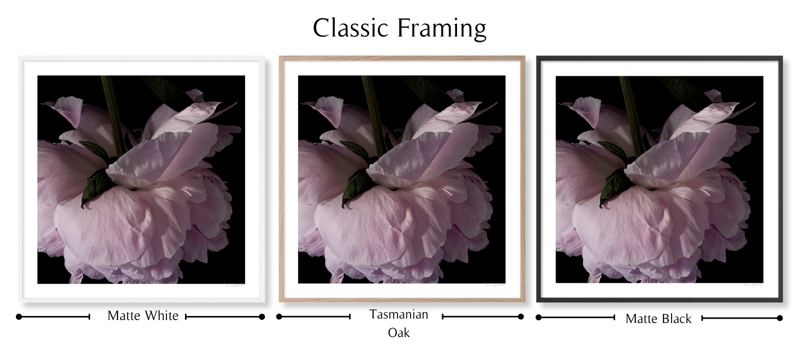 Peony #1 by Lauren Daly | Classic Framing Style | LD Art House
