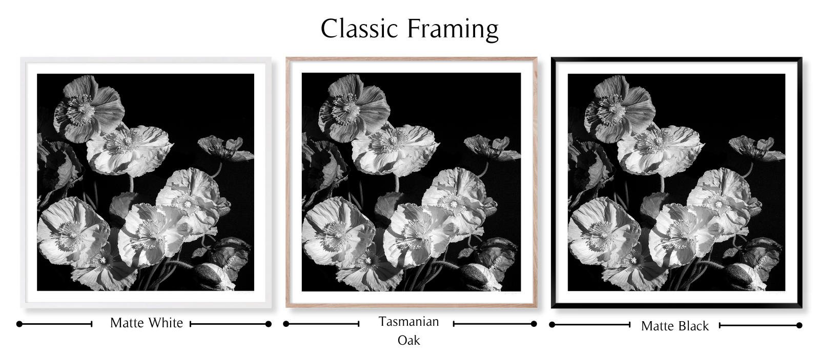 B&W Poppies by Lauren Daly | Classic Framing Style | LD Art House