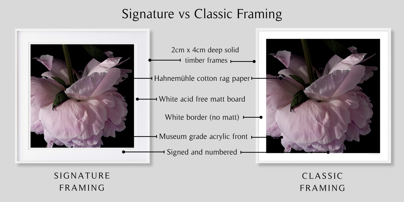 Peony #1 by Lauren Daly | Signature vs Classic Framing Style | LD Art House