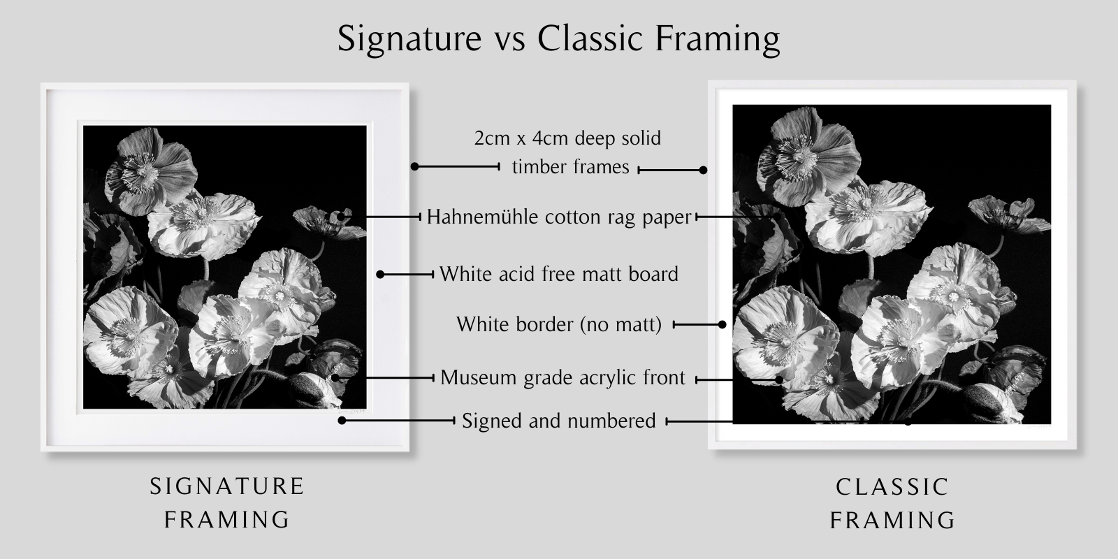 B&W Poppies by Lauren Daly | Signature vs Classic Framing Styles | LD Art House