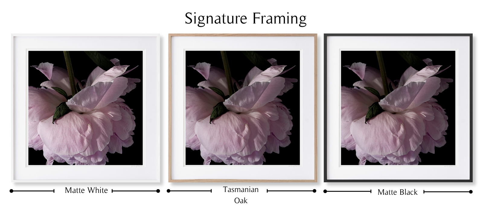 Peony #1 by Lauren Daly | Signature Framing Style | LD Art House